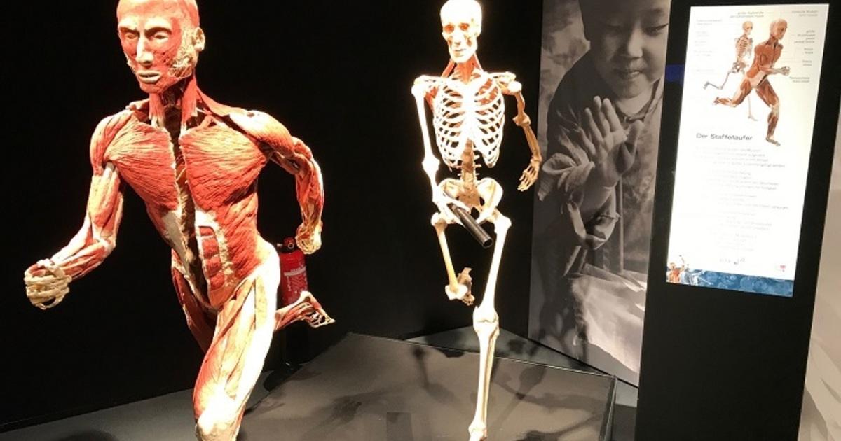 Körper Ausstellung Regensburg