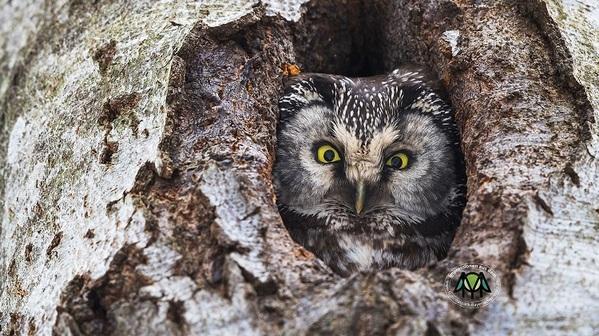 © Rainer Simonis/Nationalpark Bayerischer Wald