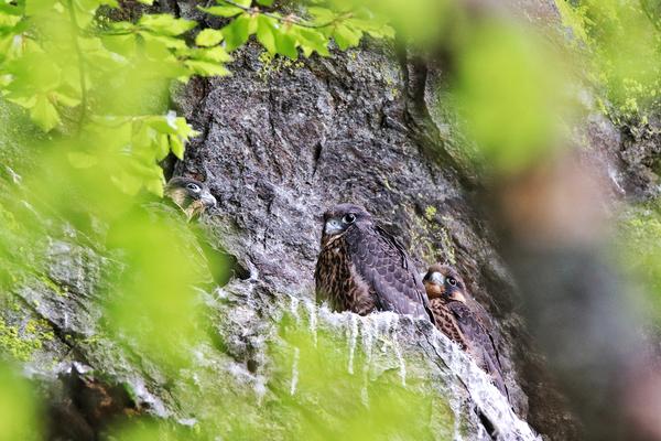 © Nationalpark Bayerischer Wald